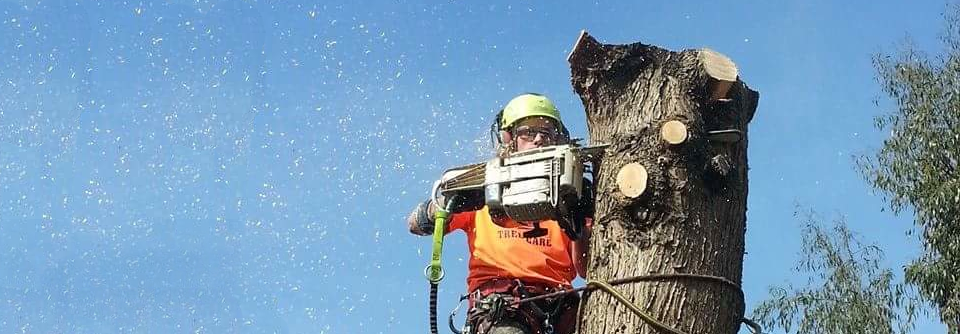 Tree care and Estate Management